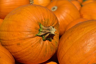 Orange pumpkin on orange pumpkins