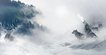 White wolf on snow covered ground under white clouds during daytime