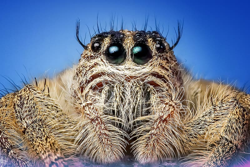 Close-up photography of brown jumping spider