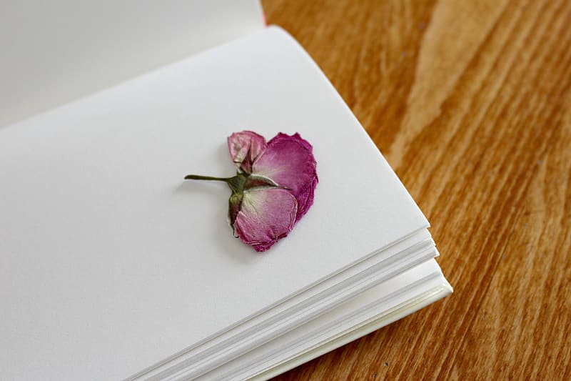 Close up photo on purple petaled flower on book page