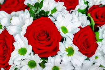 Red and white flowers on red textile
