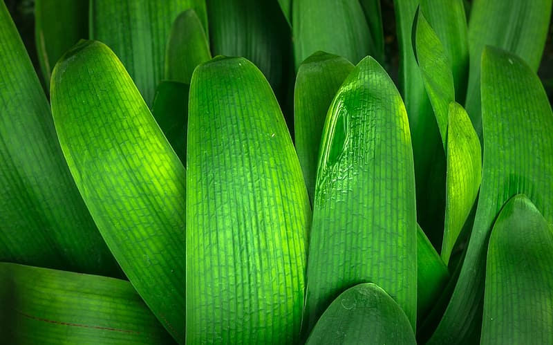 Close up photography of green leaf plant