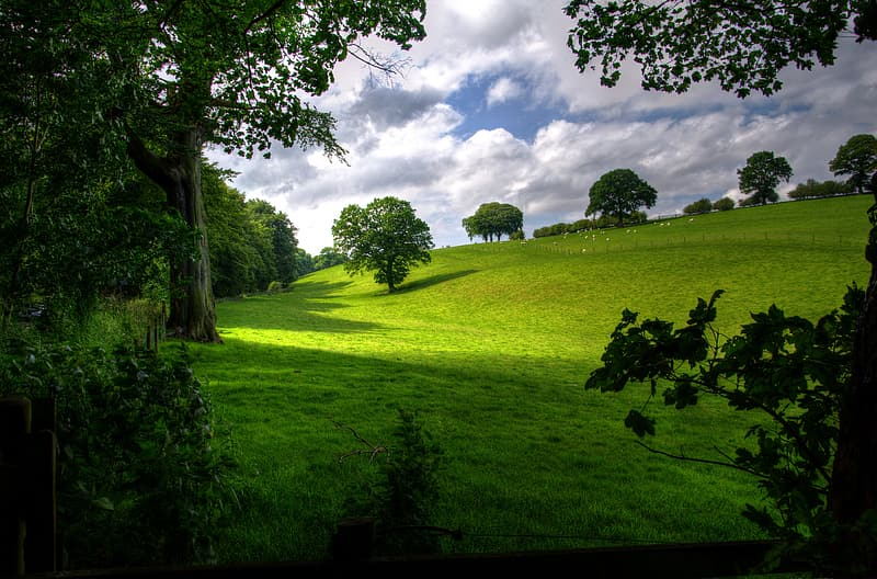 Green grass field with trees during daytime