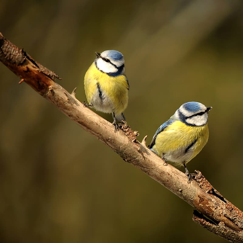 Two white-blue-and-orange birds on tree trunk