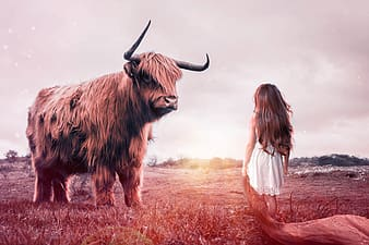 Bison in front of girl