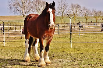 Brown horse and green grass field