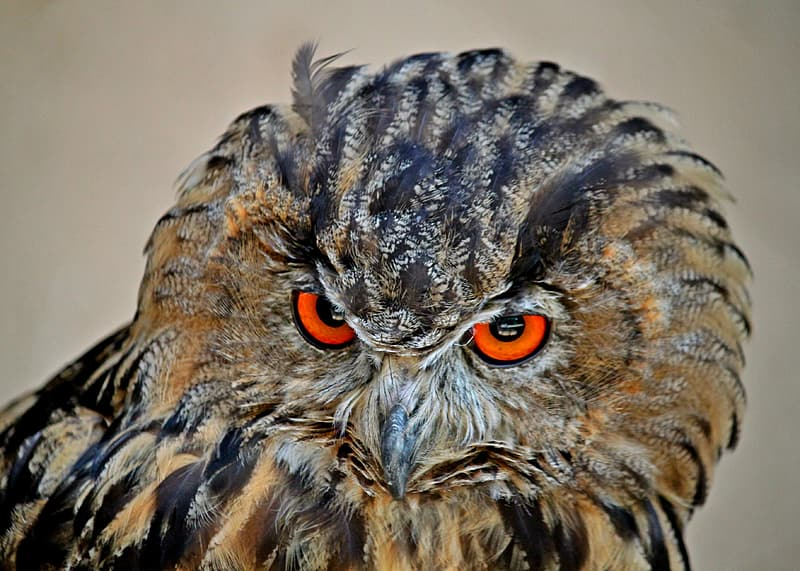 Shallow focus photography of owl during daytime