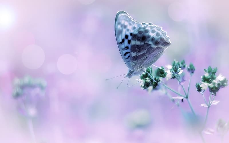 Gray and white butterfly on petaled flower