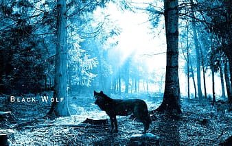 Black wolf at forest