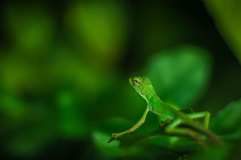 Selective focus photography of green lizard