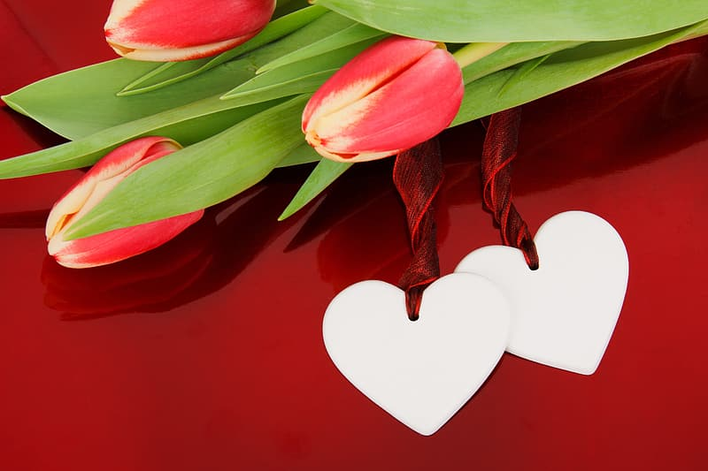 Closeup of red tulips and hear cutouts