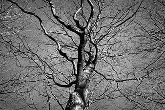 Low angle grayscale photography of a tree