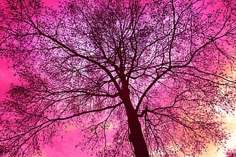 Pink leafed tree at daytime illustration
