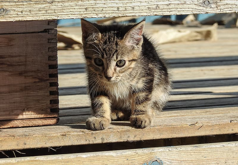 Brown tabby cat on brown wooden bench