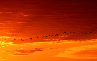Silhouette of birds flying on sky during sunset