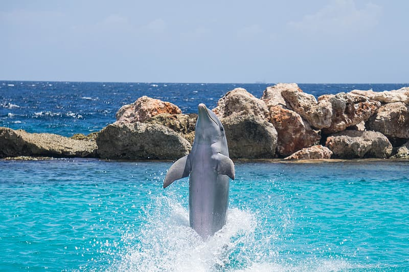 Dolphin beside rock formation