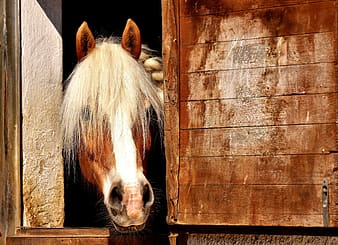 Photo of white and brown horse