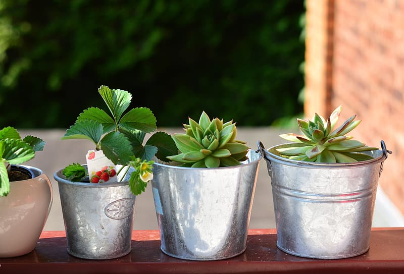 Three silver pots with succulent plants
