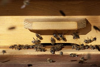 Photography of bees in box