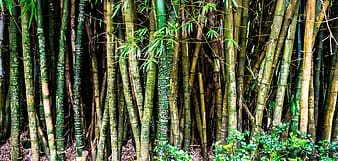 Brown and green bamboo tree