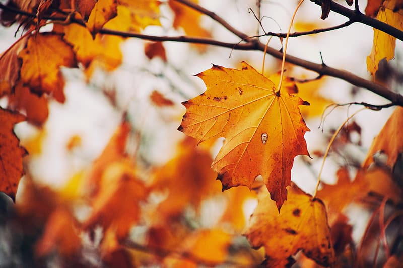 Brown leaf photography