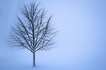 Tree on winter