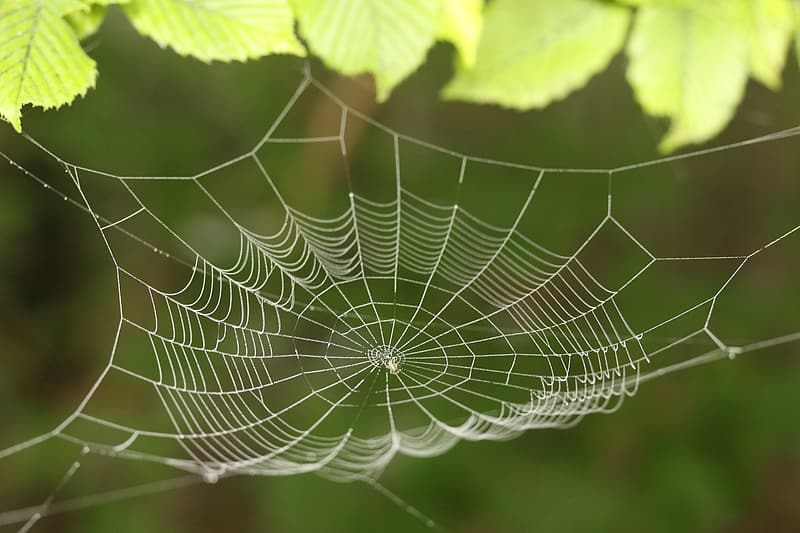 Spider web with water droplets in macro photography