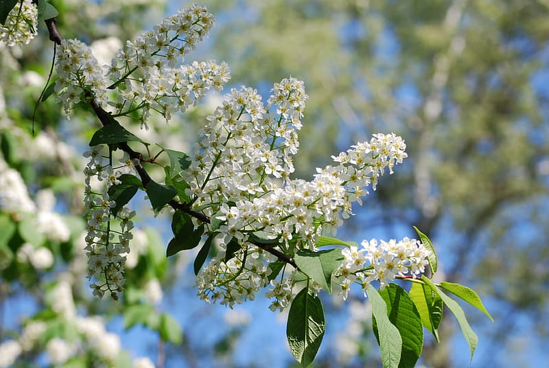 White flowers on green tree during daytime