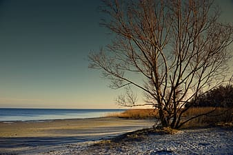Leafless tree on snow covered ground near body of water during daytime