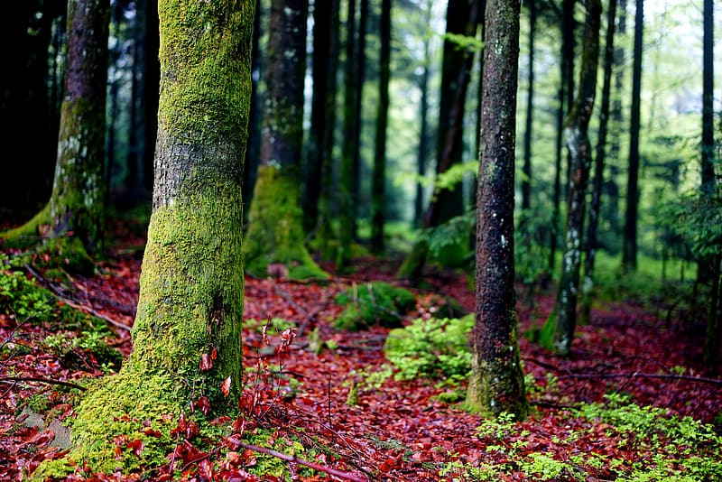 Green and brown trees on forest during daytime