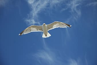 White seagull at the sky during daytime