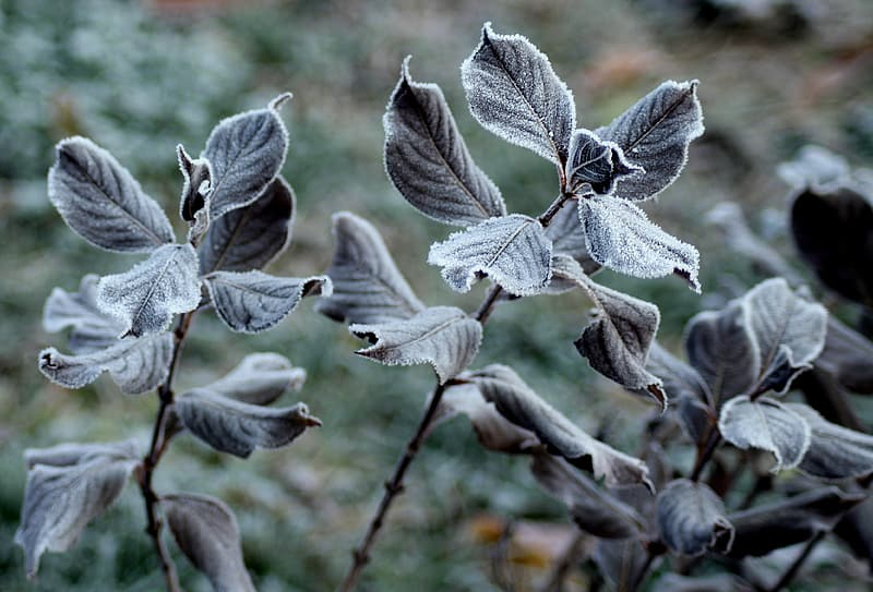 Grey leaves in close up photography