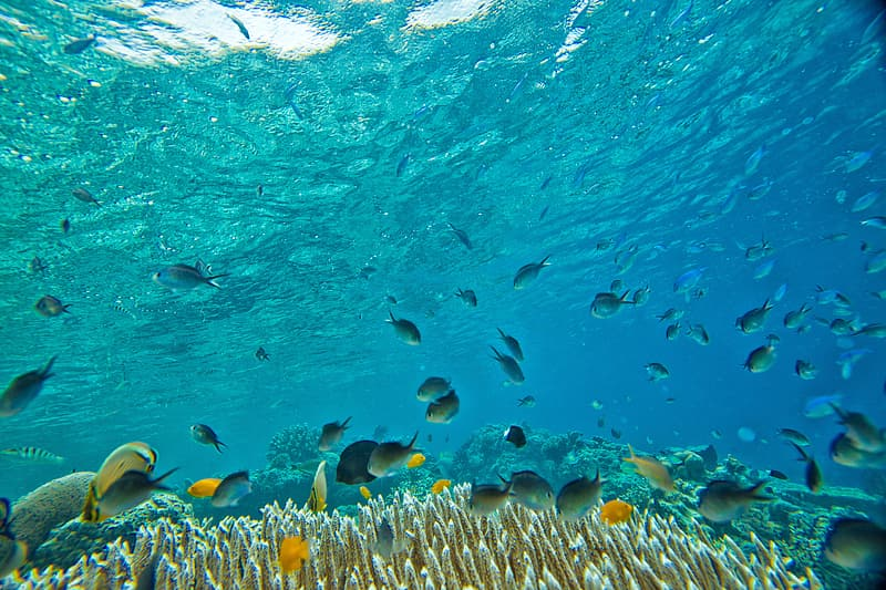 Underwater photography of shoal of salt water fishes