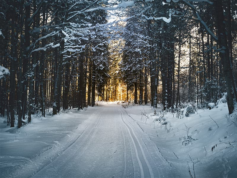 Snow coated road surrounded with trees