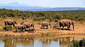 Group of elephants walking beside body of water during daytime