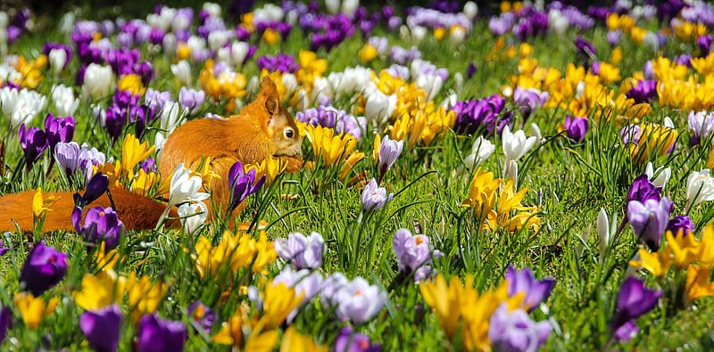 Shallow focus photography of brown squirrel surrounded by assorted-color flowers