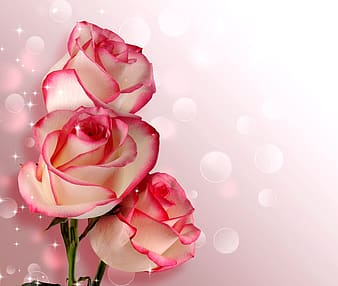 Photo of pink and white petaled flowers