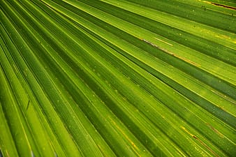 Closeup photo of green leaf