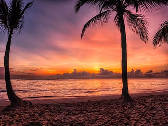 Palm trees near seashore during sunset
