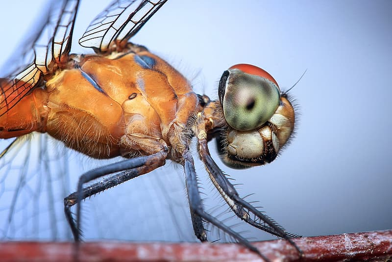 Brown and green dragonfly close up photography