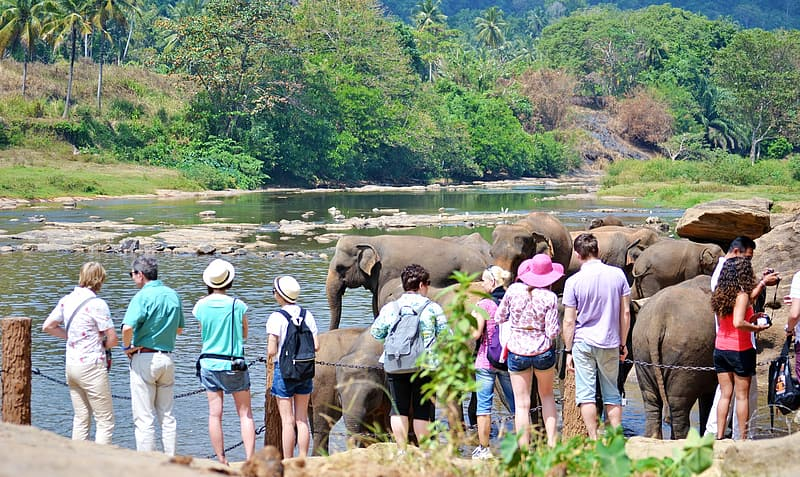 People standing near elephant and river during daytime