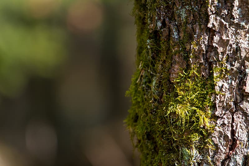 Selective focus of tree trunk