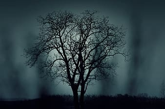 Silhouette of bare tree during nighttime