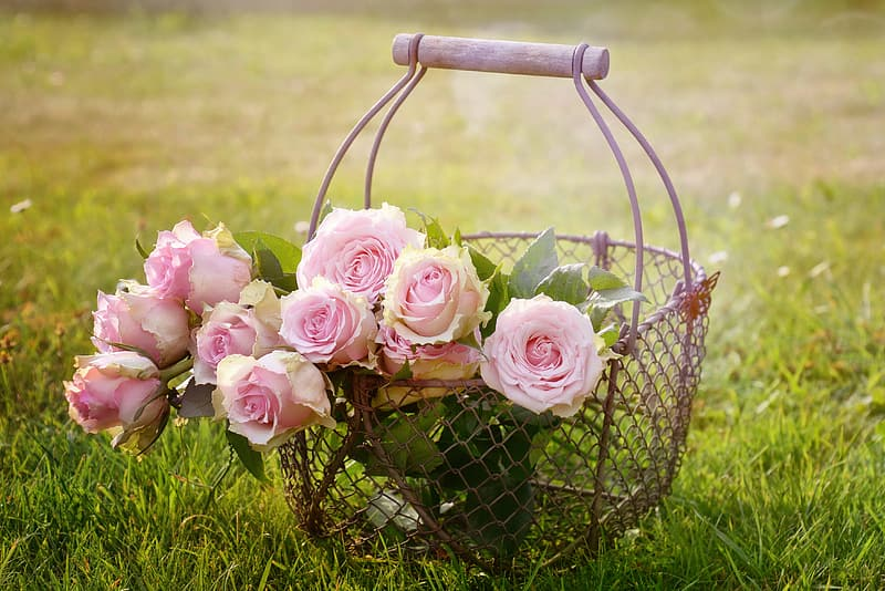 Gray metal flower basket with pink rose flowers taken during daytime