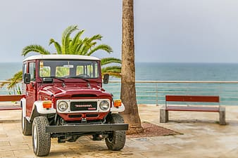 Red car parked near palm tree and body of water during daytime