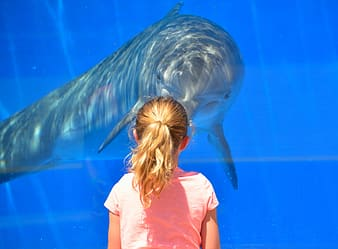 Selective focus photography of girl standing in front of dolphin with glass