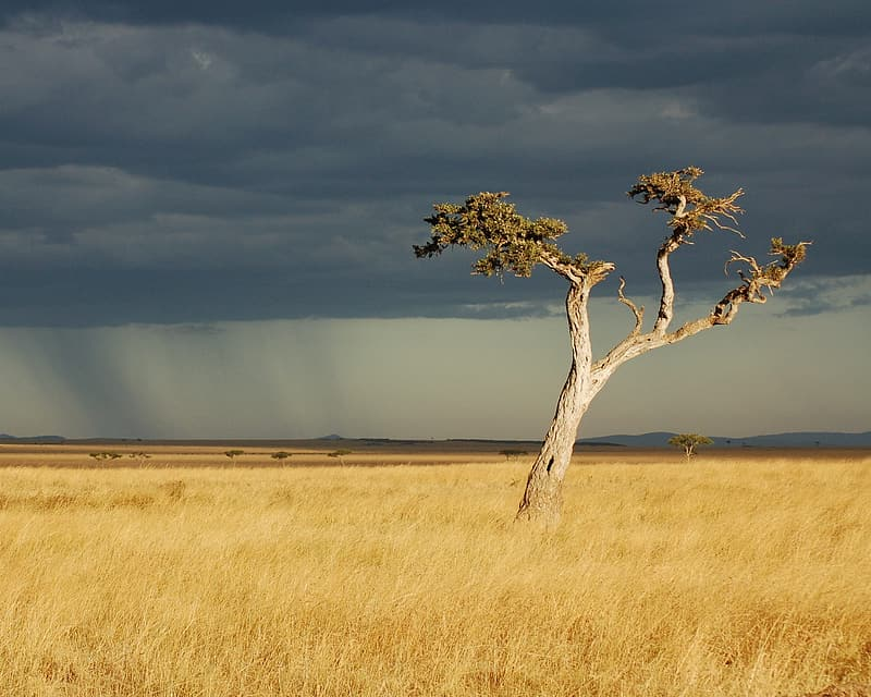 Tree on brown grass field during daytime