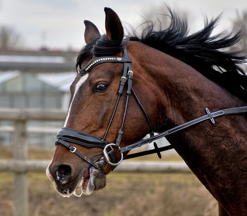 Page 5 | Royalty-free HD horse bridles photos | Pikrepo