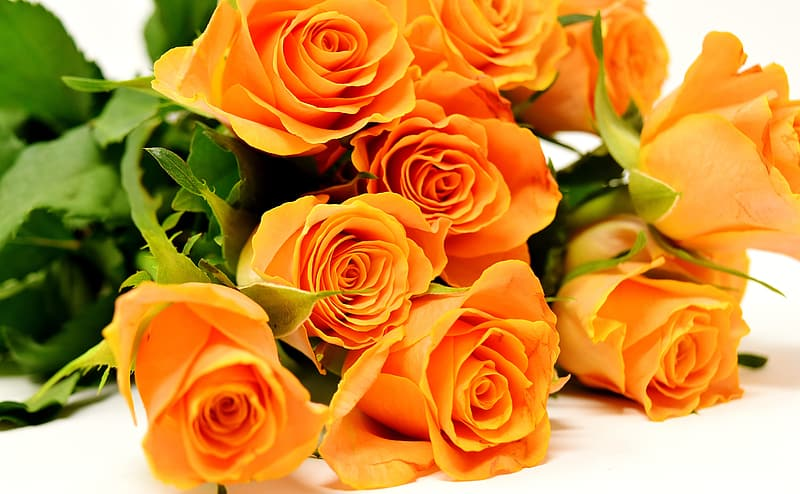 Close-up photography of orange rose flowers on white surface