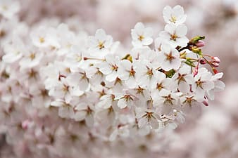 Shallow depth of field photo of white petaled flowers